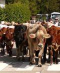 Via alla XIX Festa della Transumanza di Bressanvido