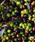 Sagra delle olive 2017