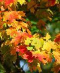 Autumnia, una vetrina d'eccellenza per i prodotti toscani e non