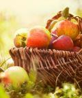 Pomopero, mostra espositiva di mele e pere