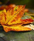 Fiera d'autunno e mercatino dei bambini