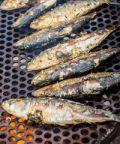 Festa del Pesce a Guizza