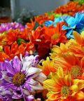 Fiera del fiore: festa paesana dedicata alla primavera e ai fiori