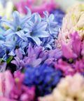 Primavera in giardino