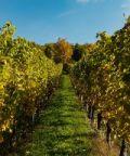 Zola Jazz&Wine 2017: musica e ottimo vino dei colli bolognesi