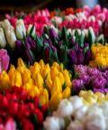 Fiori & Colori