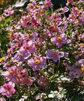 Reggello fiorita, mostra mercato di piante e fiori