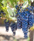 Mercato dei Vini dei Vignaioli Indipendenti 2017