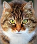 I gatti più belli del mondo