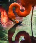 Primavera Slow 2019, natura e gusto nel Delta del Po
