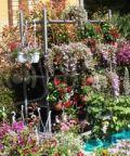 Cattolica in fiore, mostra e mercato di fiori e piante ornamentali
