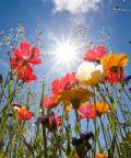 Festa Provinciale dei Fiori e dell'Agricoltura