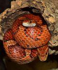 Reptilia Expo: l'affascinante mondo dei rettili