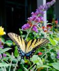 EntoModena 2018, insetti ed invertebrati in mostra
