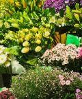 Giardini&Terrazzi 2018: in fiore tutto il centro di Ravenna