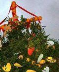 U Pagghiaru, antiche tradizioni rivivono a Messina
