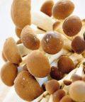 Sagra dei funghi 2017