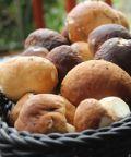 Sagra Porcelli e Porcini a Caronia: funghi porcini, suino nero e tante prelibatezze