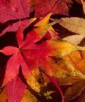 Coloratissimo autunno