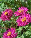Il centro storico di Levico Terme si veste di fiori