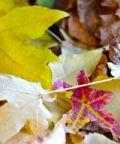Piccola fiera d'autunno, il gusto della tradizione