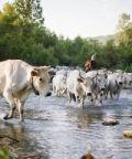 Piante e animali perduti 2018