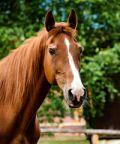 I cavalli protagoniti ad Equifest
