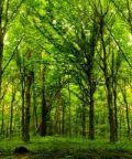 Nature Urbane, torna il Festival del Paesaggio di Varese