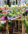 Giardini d'Autore, la mostra mercato di giardinaggio