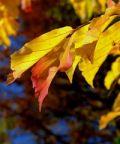 Fall Foliage al Castello di San Pelagio
