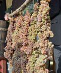 Via alla Festa dell'Uva e del Recioto di Gambellara