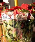 Stelle di Natale AIL 2018: a Bergamo un aiuto alla ricerca