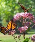 Mostra sull'Universo delle Farfalle