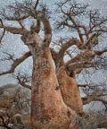 Arborea: al Muse gli alberi diventano opere d'arte Eventi a Trento