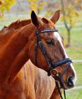 Mais e cavalli