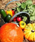 Gustando l'Autunno, giornata di ringraziamento per i frutti delle nostre terre