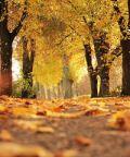 Il fall foliage nel parco ottocentesco di Villa Melzi d'Eril