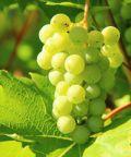 Mostra dei Vini a Refrontolo