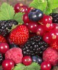 Sagra dei frutti del sottobosco e dell'artigianato artistico