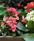 Giardino in fiore, la primavera sboccia ad Ancona