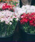 Mostra Mercato del Fiore a Pofi