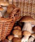 Sagra delle tacchie ai funghi porcini di Bellegra
