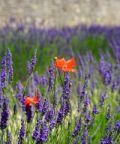 Aroma di Flora et Labora, profumi, sapori, arti e mestieri