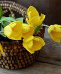 Festa dei Fiori ad Acireale: una sfilata di fiori e colori