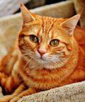 La Settimana della Micizia, una settimana dedicata al gatto