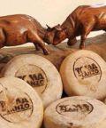 Mostra Regionale della Toma di Lanzo e dei formaggi tipici d'alpeggio