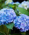 Verdi e Contenti: Mostra mercato florovivaistica