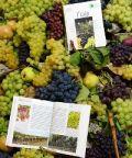 La Festa dell'uva 2018 - Un'antica festa contadina