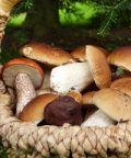 Sagra dei funghi al Villaggio di Babbo Natale