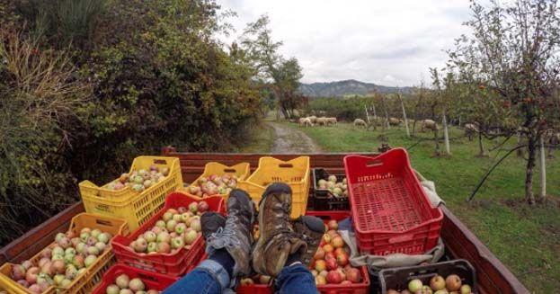 Il bello di fare wwoofing: la vera vacanza rurale